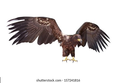 eagle a on white background