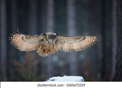 Eagle owl, Bubo bubo, nocturnal giant owl flying directly at camera with fully outstretched wings, against abstract winter background. Owl with bright orange eyes in european forest. Czech highlands.