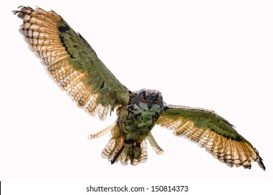 Eagle owl flying towards camera, looking directly at camera and on white background