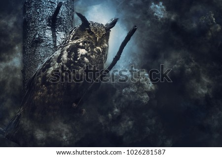 Eagle owl in the