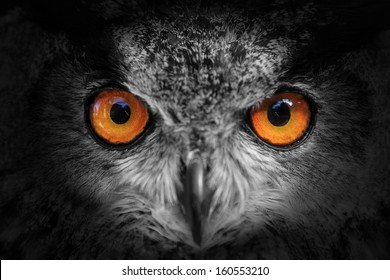 eagle owl looking out of the darkness close up, black and white