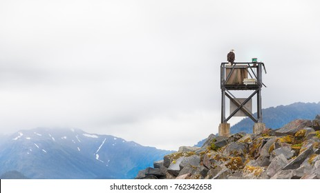 An eagle perched at the top of a ship port light in Sitka, Alaska.