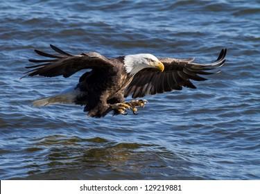 Eagle Ready