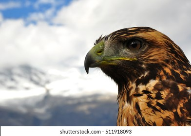 Eagle with snowy mountains like background