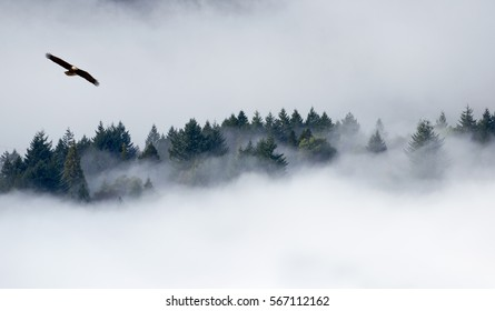 Eagle soaring over misty forest