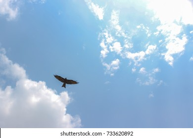 eagle soars in the clouds, against the blue sky