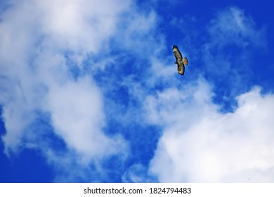 Eagle soars high in the blue sky with clouds