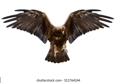 eagle with spread wings, isolated over white