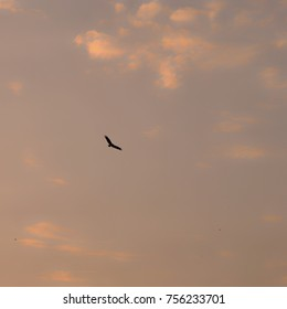 the eagle and the sunset cloud