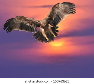 Eagle  in thailand on The evening sky