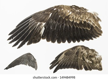 Eagle wings stuffed in exposure, animals and nature