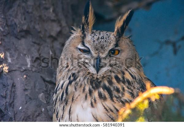 eagle-owl sitting on the tree