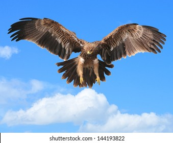 Eagles flying in the sky Backdrop