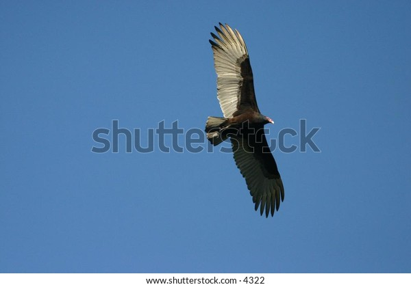 eagle's outstreched wings against a blue sky