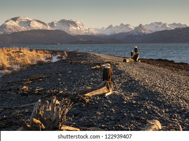 Eagles sitting on driftwood on a beach near Homer Alaska overlooking the Kachemak Bay.