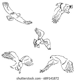 Eagles. Sketch pencil. Drawing by hand image. Raster copy of the image.