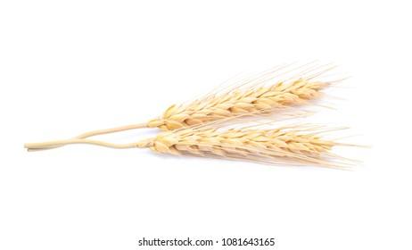 Ear of barley rice on white background