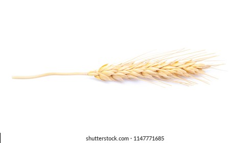 Ear of barley rice on white background