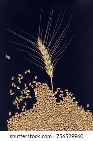 ear of wheat and grains on a black background