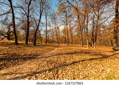 early autumn with fallen leaves in the forest, note shallow depth of  field