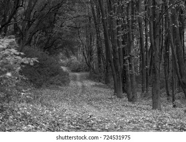 Early autumn in the forest. Black and white photo.