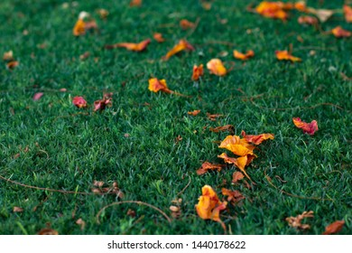 early autumn season wallpaper patter background concept picture of gold falling leaves from trees on a garden green grass meadow, copy space for text