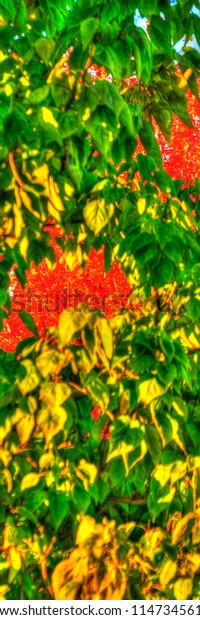 Early fall color of red and yellow abstract