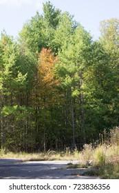 Early Fall Foliage, Wompatuck State Park. Wompatuck state park is  large park in Higham Massachusetts