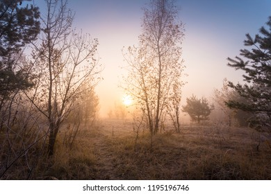 Early foggy morning at meadow of autumn forest. Sunlight through the fall trees. Beautiful dreamy scene with hoarfrost on trees, bushes and dry grass.