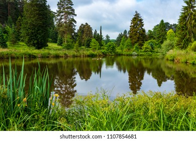 An early June walk around Bedgebury Forest and Bedgebury Pinetum in Kent south east England