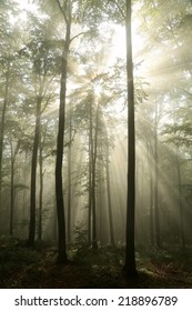 Early morning in autumn beech forest after rainfall.