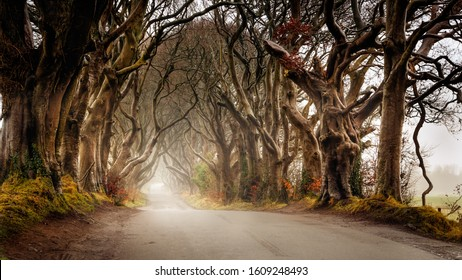 Early morning in autumn with mist or fog at The Dark Hedges, County Antrim, Northern Ireland. Filming location of popular TV show, Kingsroad, Game of Thrones