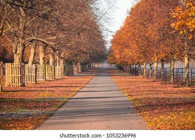 Early morning autumn scene at Bushy Park in London