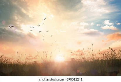 Early morning concept: Birds flying on meadow autumn sunrise landscape background