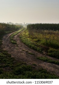 Early morning in the corn fields, agricultural theme