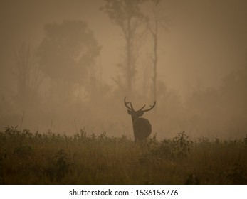 Early morning with deer in the mist
