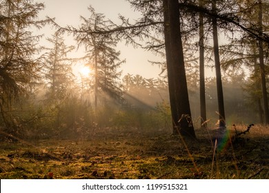 Early morning In an European Forest With fog and sunlight
