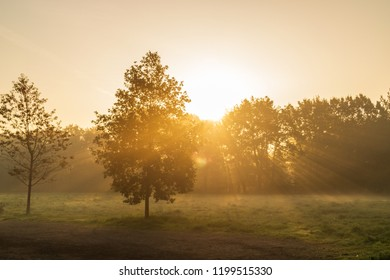 Early morning In an European Forest With fog and golden sunlight