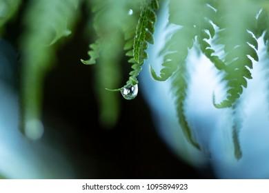 early morning fern water droplets