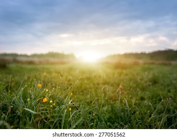 early morning field of flowers,natural summer background