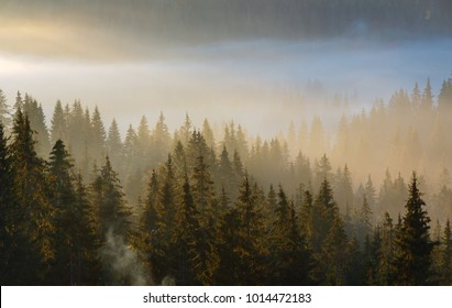 Early morning fog and first morning sun rays over the autumn slopes of Carpathian Mountains (Yablunytsia village and pass, Ivano-Frankivsk oblast, Ukraine).