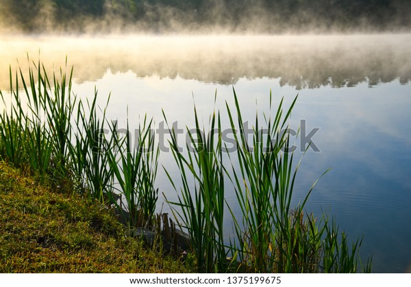 early-morning-fog-over-lake-600w-1375199
