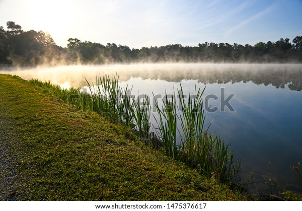 Early Morning Fog over a Lake with Trees Reflected in the Water