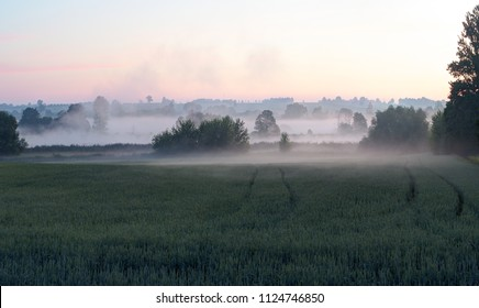 Early morning in the foggy field.