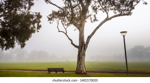 early morning foggy local sports oval Malvern Melbourne white ghost gumtree cityscape dog walkers
