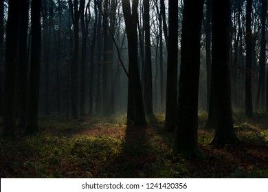 Early morning in the forest - Shutterstock ID 1241420356