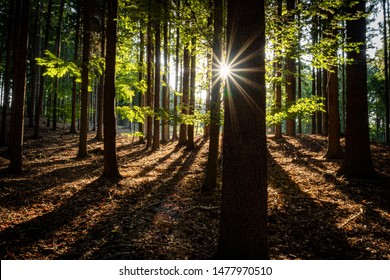 Early morning in a forest. Amazing tones of green color, sunlight and fresh air. Peaceful and relaxing scene.
