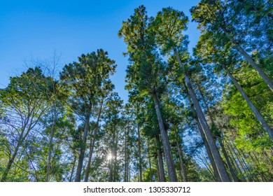 Early morning forest and sun