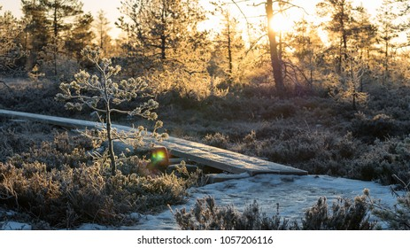 Early morning frosty bog scene