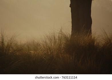 Early morning heavy fog.